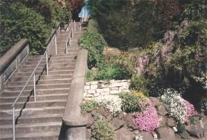 flowerlinedwalkway